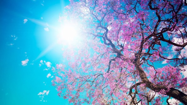 Cool-Spring-Wallpaper-HD
